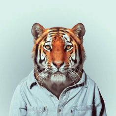 animal in clothes portraits | Whimsical Portraits of Animals Modeling Trendy Human Clothes