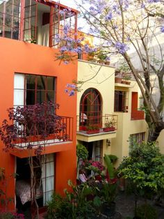 Enjoy the colorful garden of the Red Tree House in the Condesa neighborhood.  Mexico City,  MEXICO.