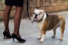 Urban scene with a black-dressed woman with a bulldog. Woman is wearing high heels shoes - Photo by Rafa Elias/Moment/Getty Images