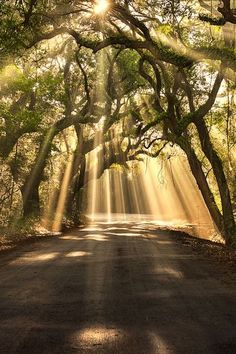 gyclli:    Botany Bay Road, Edisto Island, SC  Breaking Through/By Michael Woloszynowicz