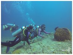 The Andaman beginners dive tour is ideal for anyone who wants to get started with the basics of diving and aspires to travel and explore dive sites and wrecks across the world. Get trained and certified by PADI, the best certification course in scuba diving.