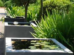 Container water gardens or tiny ponds are p erfect for patios, decks and balconies. Ponds Backyard, Garden Pool, Water Garden, Water Plants, Outdoor Landscaping, Outdoor Plants, Outdoor Gardens, Small Water Features, Water Features In The Garden