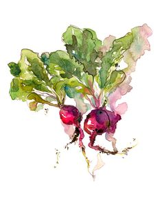 Kitchen Art, Spring Gardening radish watercolor- 8x10 print from an original…