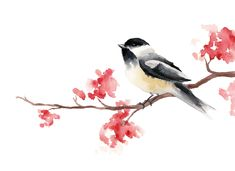 Chickadee …                                                                                                                                                                                 More