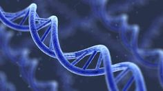 Supreme Court Asks: Can Human Genes Be Patented?