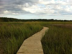 Image result for wellfleet marsh