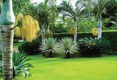 Resultado de imagem para nomes de plantas para jardim