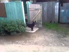 This dog keeps the door open to get a good look of the neighborhood and looks extremely cool while doing it.