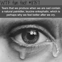 Why we feel better after we cry - WTF fun facts