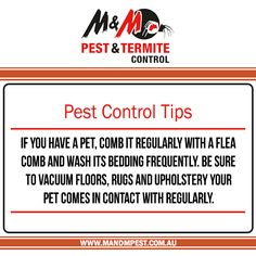 Termite Inspections Pest Control Inspections