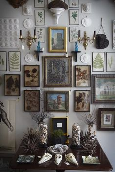 Ethnic Cottage Decor: COLLECTIONS & CABINETS OF CURIOSITIES