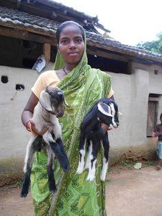 INDIA - Family Livestock