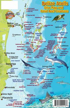Belize Atolls Dive Map and Coral Reef Creatures