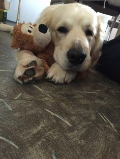 Hunde Foto: Sabine und Djego - Kuschel-time Hier Dein Bild hochladen: http://ichliebehunde.com/hund-des-tages #hund #hunde #hundebild #hundebilder #dog #dogs #dogfun #dogpic #dogpictures
