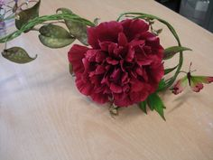Peony Rose & Butterfly like Alan Dunn