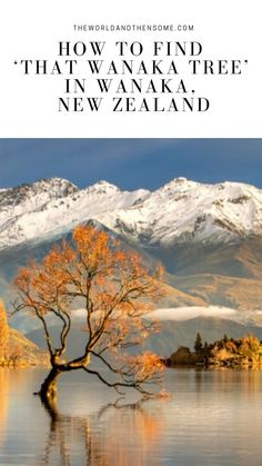 Are you looking for instructions on how to find 'That Wanaka Tree' in New Zealand? Here you'll find instructions and tips on the best time of day to visit. Wanaka New Zealand, Queenstown New Zealand, Lake Wanaka, New Zealand South Island, New Zealand Travel, Travel Aesthetic, Australia Travel, Places To See, Beautiful Places