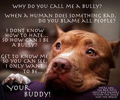 There are no bad dogs, only bad owners. Punish the deed, not the breed.