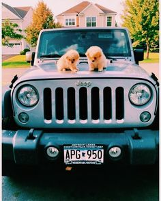 Little puppies on a Jeep! Cute Little Animals, Cute Funny Animals, Cute Dogs And Puppies, Cute Cars, Cute Animal Pictures, Cute Creatures, Animals And Pets, Fur Babies, Dream Cars