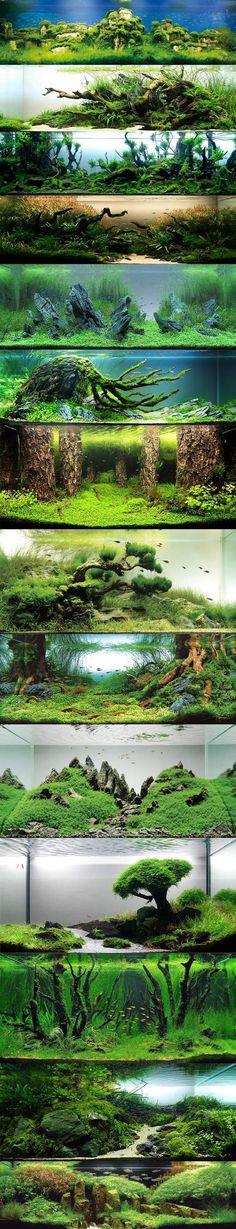 Aquarium gestalten.