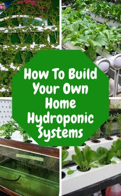 Home Hydroponics. Are you excited about what you've read so far about hydroponic gardening? Ready to start you own hydroponic garden and put theory into practice? Lear how to build your own home Hydroponics. gardening how to bui farming aquaponics system