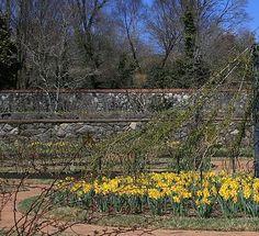 Cody Cookston - The Gardens at Biltmore Estate IV
