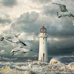 ~~ Gulls at Perch Rock Lighthouse, River Mercy, New Brighton by Tarrby~~