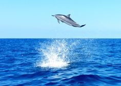 How dolphins should be- wild and free.