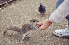 Mia's lifestyle: London's Squirrels