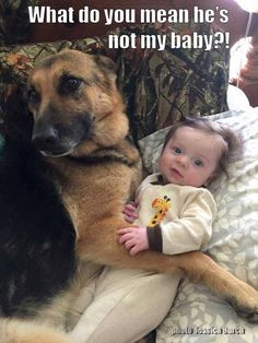 Isn't that the truth! Baby German Shepherds, German Shepherd Puppies, Funny Pets, Cute Funny Animals, Cute Dogs, Dog Baby, Doggies, Dogs And Puppies, Dog Pictures