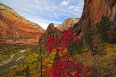 Zion+Canyon+National+Park | zion-canyon-zion-national-park-1117251452-o1.jpg
