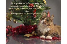 Felicitare de Craciun cu pisica