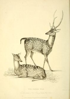 The wonders of the animal kingdom : - Biodiversity Heritage Library