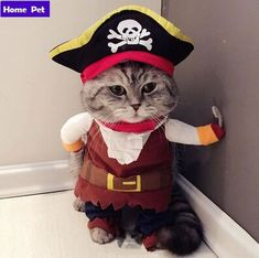 Cute Halloween Costume For Your Kitty