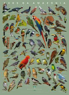 Birds of Amazonia