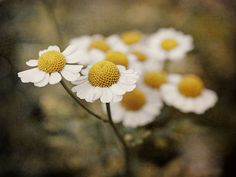 Pretty (Source: Flickr / valanne)