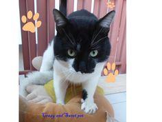 Crazy and Sweet Pets: Conosciamo il gatto..