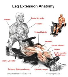 .Another great breakdown of the anatomy of the legs.  The quadriceps really are 4 distinct muscle that you can target.