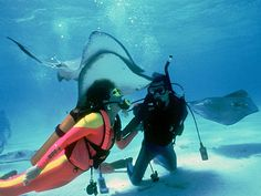 The signature tourism experience of the Cayman Islands is socializing with stingrays at Grand Cayman's Stingray City.