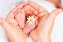 Como o bebê se desenvolve a cada semana de gravidez - Tua Saúde
