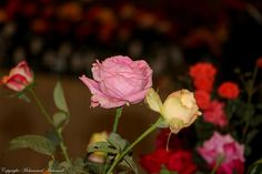 Flower Show - 29th November, 2014 at HICC, Hyderabad,