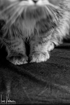 361/365. De gatos y camillas