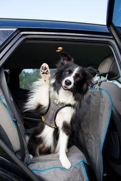 Magnum Opus, Dog Safety, Dog Car, Dog Travel, High Five, Medium Dogs, Dog Harness, Small Dogs, Your Dog