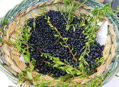 Mirto #myrtle #sardegna #sardinia #food
