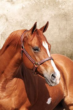 Ginger facts- barrel racer, 16 years old, 15.3hh, rescued when she was 14, quarter horse Sabrina's horse