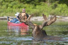 Camping in Algonquin Park Canada | Canoeing in Algonquin Park | PanamericanWorld