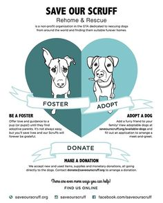 Save Our Scruff -Foster a rescue dog Rescue Dogs, The Fosters, Pup, Memes, Puppies, Doggies, Meme, Puppys