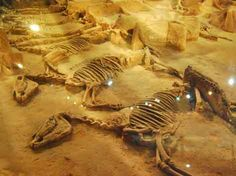 Image Detail for - Horse and Chariot Pits - China culture