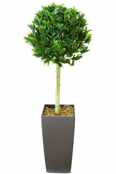 Artificial+bay+trees+suitable+for+indoor+and+outdoor+use+available+in+various+sizes+potted+or+un+potted