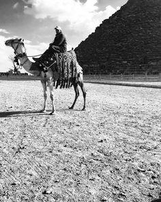 🐪🔺#pyramids #travel #camel #egyptfeeling #desert #oriental #egypt #shadow #blackandwhite #travelonmymind #contrast #travelgram #travelphotography #exlore #travelmania #iphonography