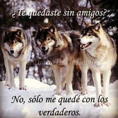 lobos frases - Buscar con Google Mentor Of The Billion, Best Quotes, Favorite Quotes, Lone Wolf, Wild Wolf, Mindfulness Quotes, Spanish Quotes, Good Things, Funny Things